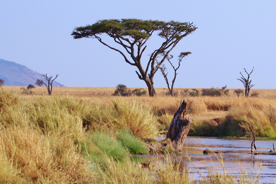 Un safari en Tanzanie